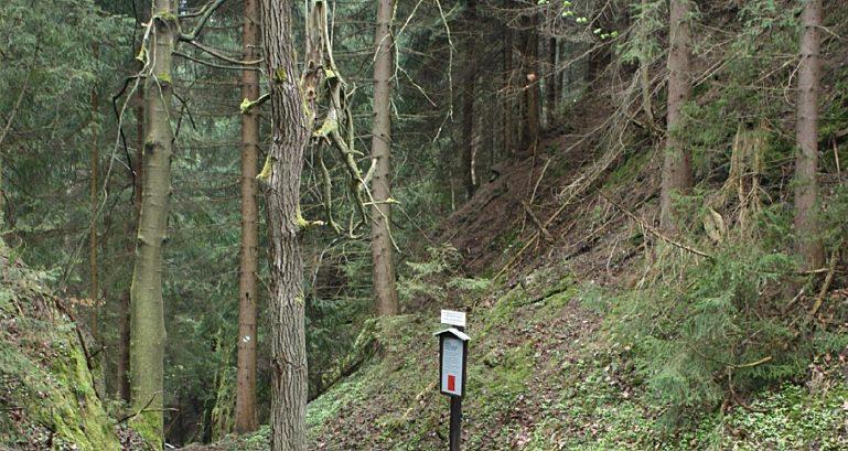 Wald 2 Jpg