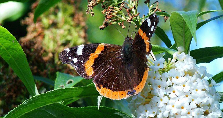 Butterfly 1593988 1920